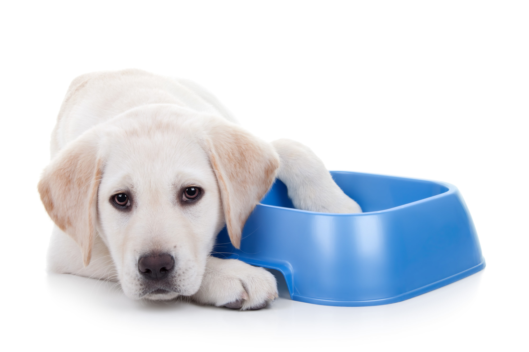 7 Awesome Reasons to Get a Dog This Year