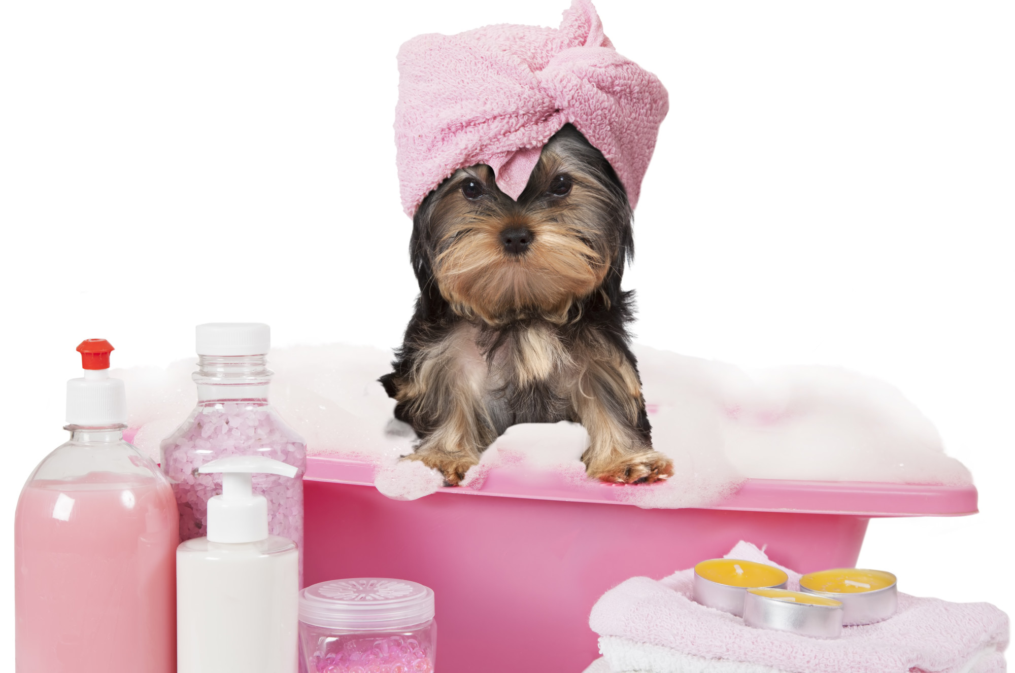 How to Treat Yeast Infections in Dogs: The Methods Explained
