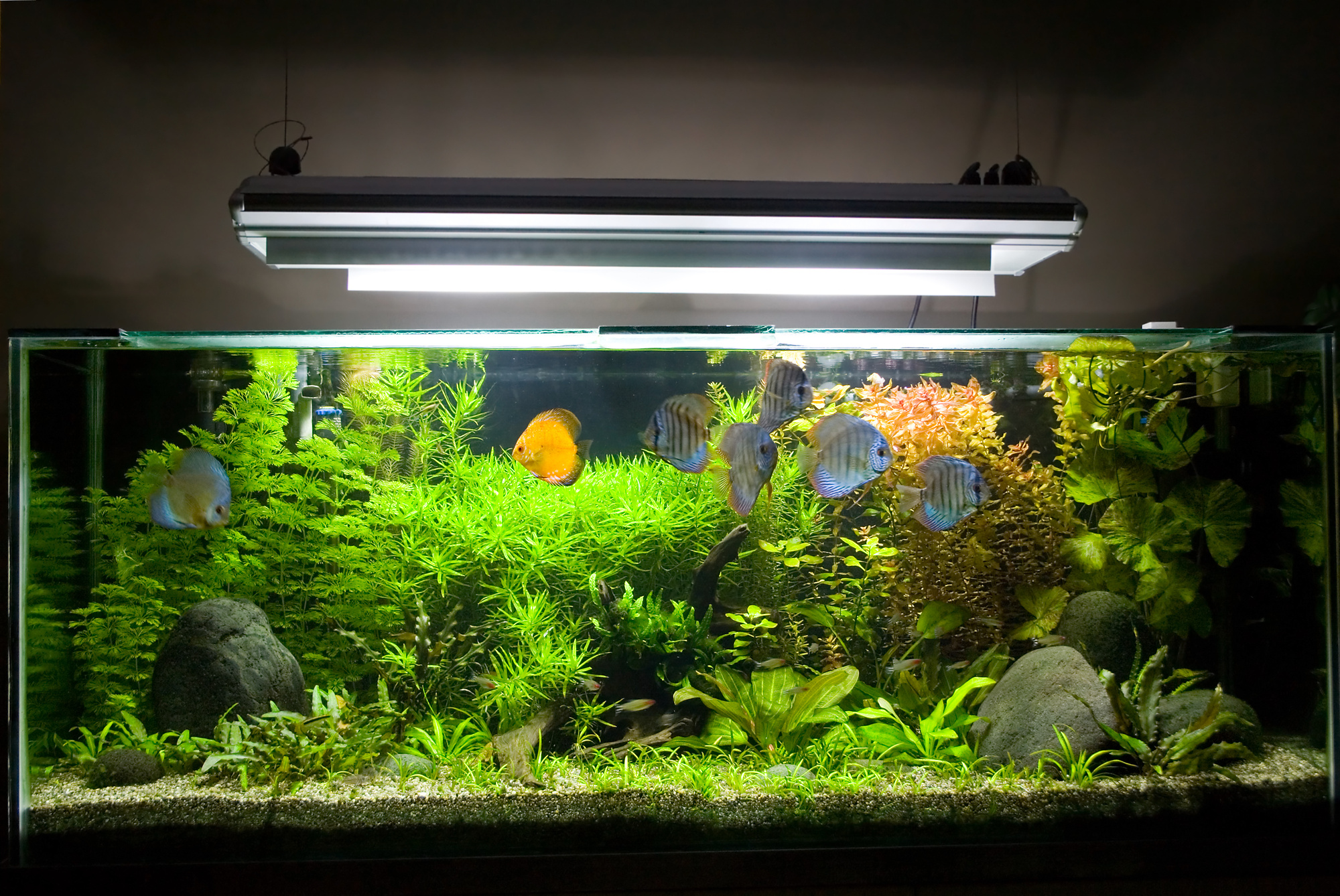 Starting a Fish Task: Basic Fish Care and Aquarium Setup Ideas